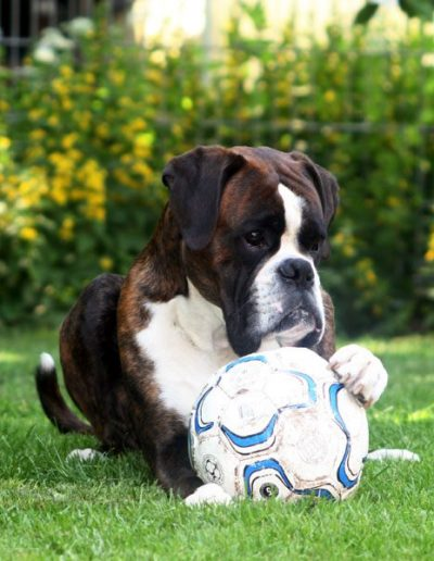 Aristo mit Ball